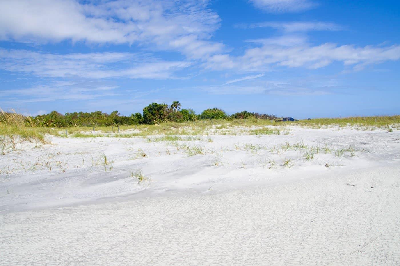 AmeliaIslandFloridaFernandinaBeachisoccupiedbywildbirdsFloridaUSA best beaches