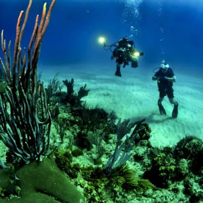 Scuba diving in the waters of Key Biscayne