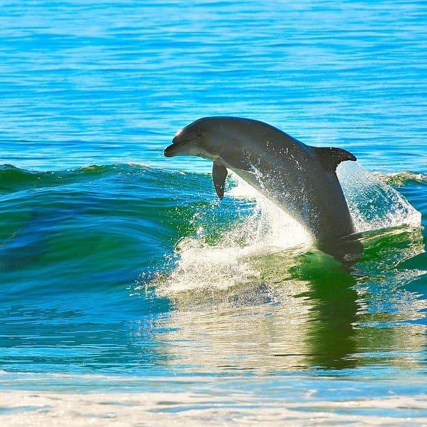 Panama City wildlife