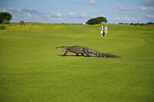 Hotels for florida golfing holidays