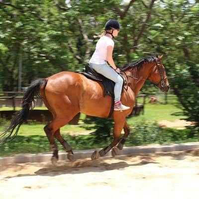 Horse riding in Gainesville Florida