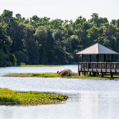 Gainesville Florida wetland