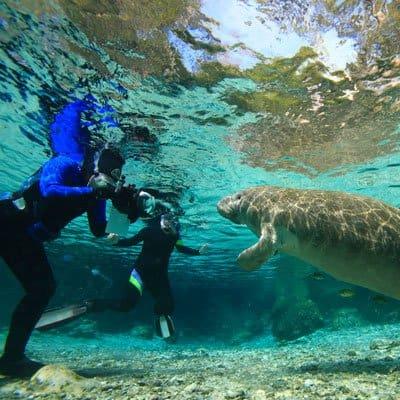 Diving in Kings Bay Crystal River resort