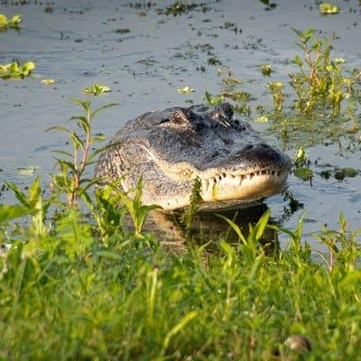 Gainesville Florida nature