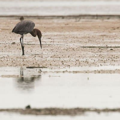Sarasota wildlife