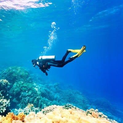Scuba diving in Coconut Grove