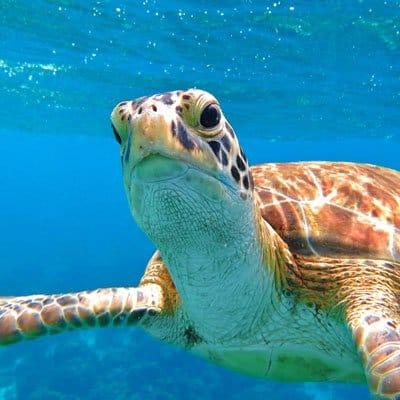 Turtle hospital in Marathon Florida