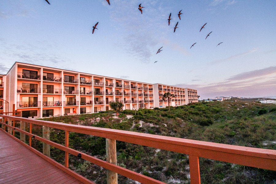 Beachers Lodge Birds