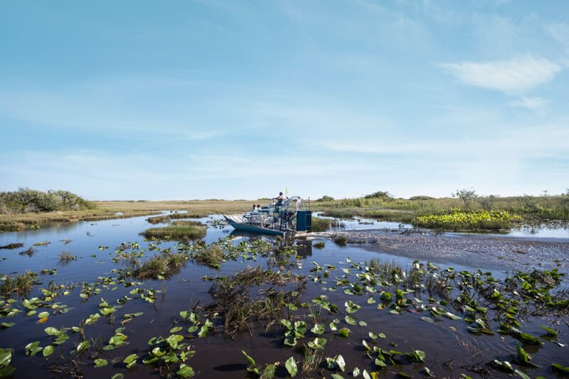 Everglades Tigertail Airboat Tours Offbeat side of Florida