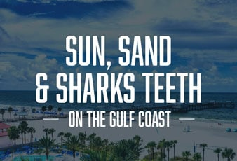 Sund, Sand and sharks teeth Collection