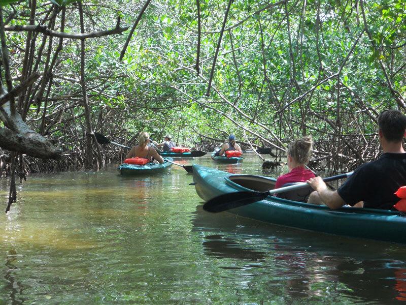 Mangrove tunnel kayaking Green Monday