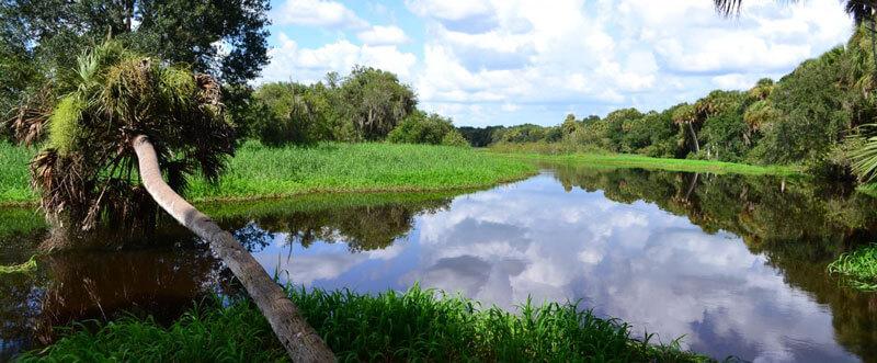 Myakka River State Park Green Monday