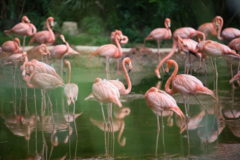 bird 5154150 1920 2 pink monday