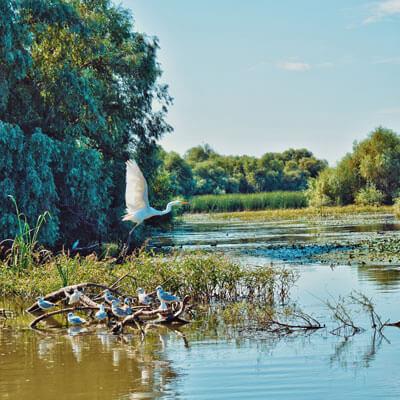Everglades Wildlife
