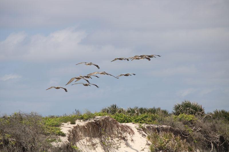 birds All-American Road